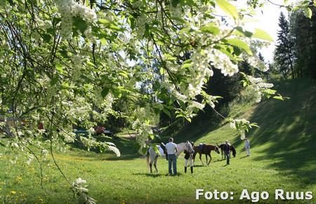 haanjamaa2012_gallery_add_020